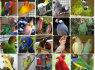 Amazonės, aras, Kakadu, Afrikos Grays ir derlinga kiaušiniai (1)