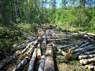 Miškas išsikirtimui. Miško kaina