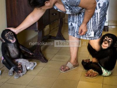 Du kūdikių Šimpanzė priimti