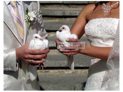 Balti balandžiai - meilės ir ištikimybės simbolis