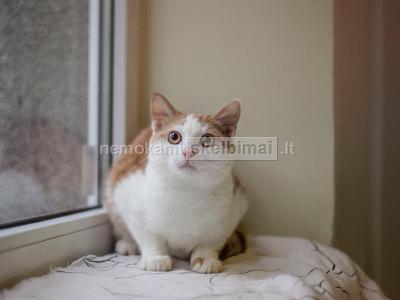 Katinas Liucijus