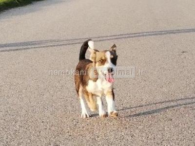 Dovanojama šuniukė Kvietkiukė paskiepyta, sučipuota